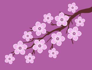 pink sakura cherry blossom dark pink background illustration