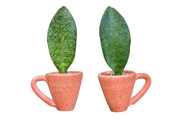 Houseplant - leaves Plant a potted plant on a white background
