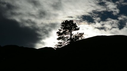 Clouds moving past a silhouetted tree at sundown