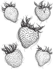 Strawberry sketches