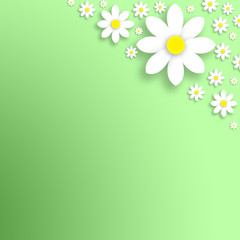 Spring simple daisy flowers background