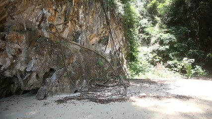 sandy beach among cliff and trees with lianas