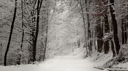 Foret trails in the winter