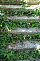 stairs and vine - 13