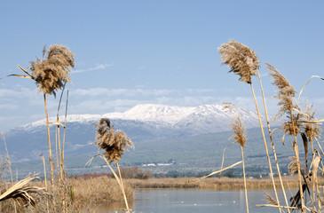 Agamon Hula bird refuge, Hula Valley, Israel