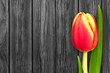 canvas print picture - Tulpe und Holz