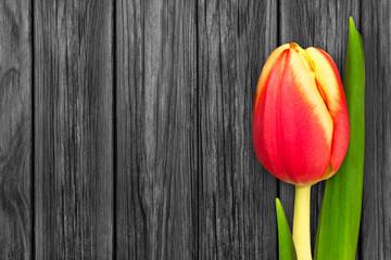 Tulpe und Holz