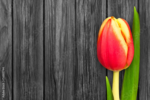 canvas print picture Tulpe und Holz