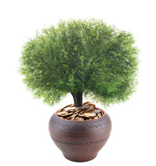 Green tree growing in ceramic pot full of coins isolated