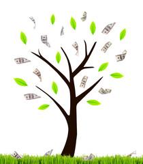Money tree isolated on white