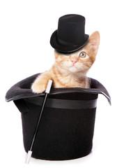 kitten magician