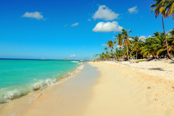 Exotic caribbean sandy beach with tall palm trees