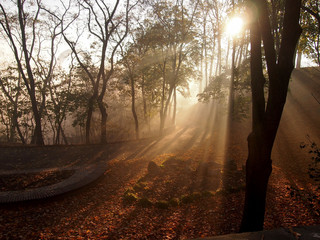 Парк в лучах солнца