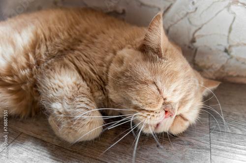 熟睡する家猫 上半身日差し