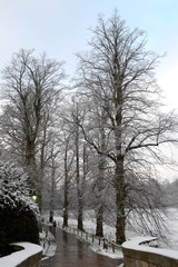 Tall Trees in Winter