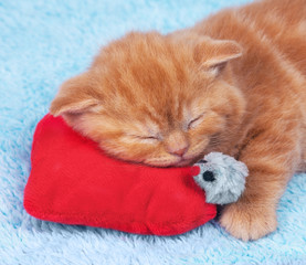 Red kitten slipping on the pillow with toy