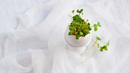 watercress salad and in eggshells - Easter card
