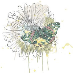 butterfly and daisy