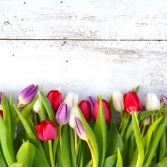 Tulpen - pastell