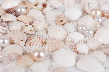 background of sea shells and pearls