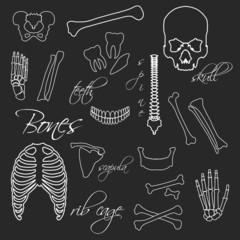 human bones white outline symbols on blackboard eps10