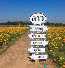 Signs of the field marigold Loei, Thailand.