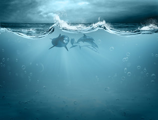 Water element in dolphin