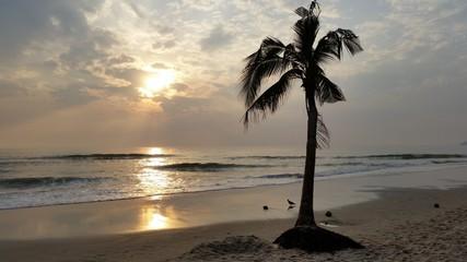 Coconut tree at huahin beach Thailand