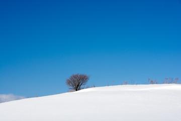 青空と雪の丘