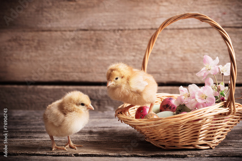 Foto op Canvas Kip chicken with Easter eggs on wooden background