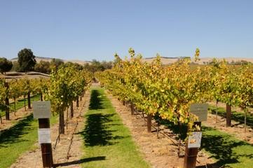 Weinanbau in Australien