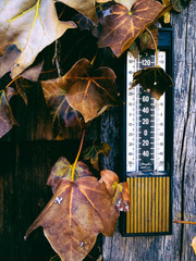 Thermometer and ivy on the wall of an old building in Glenville,