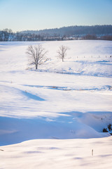 View of trees and fences in a snow-covered farm field in rural Y