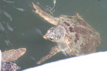 Kaplumbağa ve Deniz Yaşamı