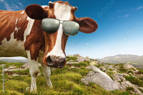 Staande foto Koe Curious Cow