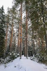 Winter in the wildwood.