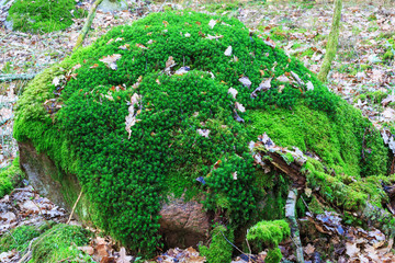 Stone cover with green moss