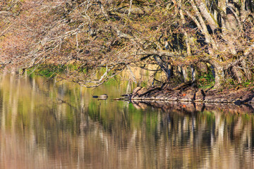 Tree branches with buds  over the water