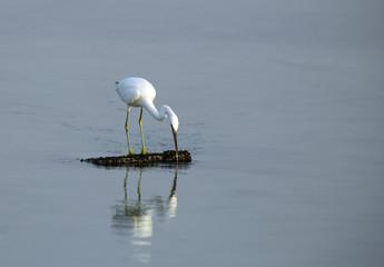 A beautiful heron fishing