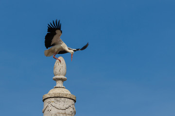 A stork slipping on top of a monument in Faro, Algarve, Portugal