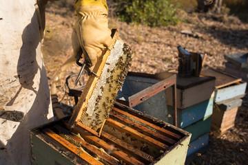 Traditional honey harvesting in a spring morning, Algarve, Portu
