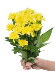 hand holding yellow gerbera flower on white background