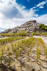 Thiksey Monastery is a Tibetan Buddhist monastery in Leh Ladakh,