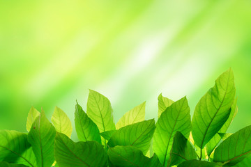 Photo of Green leaf on bright and light green color blur backgro
