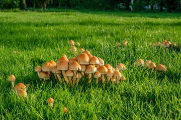 Mushrooms on green grass