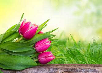 Tulpen in der natur