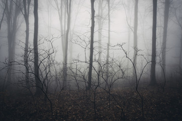 spooky misty forest