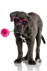 Welpe mit Brille und Blüte