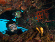 Scuba divers explore the underwater aircraft wreck