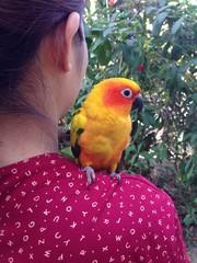 on my shoulder